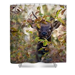 Shower Curtain featuring the photograph Yearling Elk Peeking Through Brush by Michael Dougherty