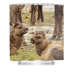 Shower Curtain featuring the photograph Yearlings by Jeff Swan