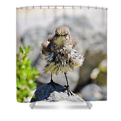 Yeh - So I Am All Wet - So What Shower Curtain