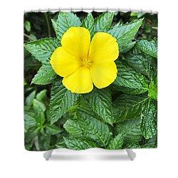 Yellow Alder Blossom Shower Curtain