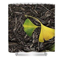 Yellow And Green Gingko Shower Curtain