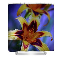 Yellow And Orange And Garnet Daylilies 1270 H_2 Shower Curtain