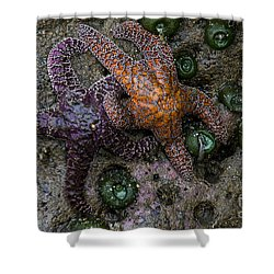 Orange And Purple Starfish II Shower Curtain