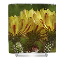 Yellow And Red Cactus Flowers Shower Curtain by Elvira Butler