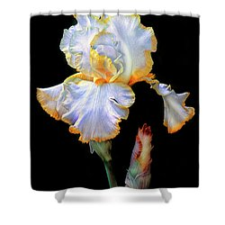 Yellow And White Iris Shower Curtain by Dave Mills