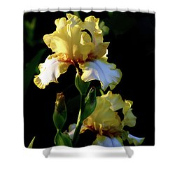 Yellow And White Irises 6681 H_2 Shower Curtain