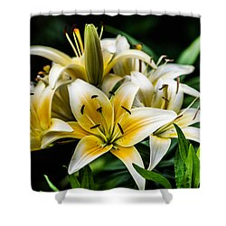 Yellow And White Lilys Shower Curtain