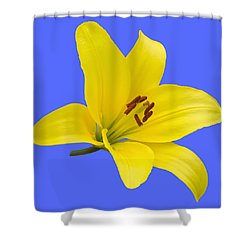 Yellow Asiatic Lily On Blue Shower Curtain by Jane McIlroy