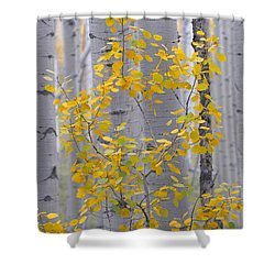 Yellow Aspen Tree Shower Curtain