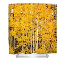 Yellow Aspens Shower Curtain by Ron Dahlquist - Printscapes