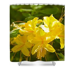 Yellow Azaleas Shower Curtain