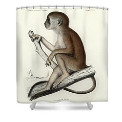 Yellow Baboon, Papio Cynocephalus Shower Curtain