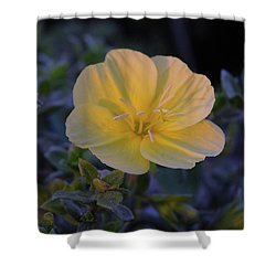 Shower Curtain featuring the photograph Yellow Beach Evening Primrose by Marie Hicks
