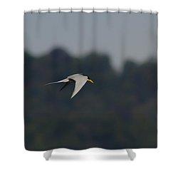 Yellow Beak River Tern Shower Curtain by Ramabhadran Thirupattur