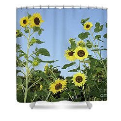 Yellow Beauties Shower Curtain by Charlotte Gray