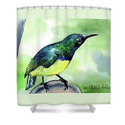 Shower Curtain featuring the painting Yellow Bellied Sunbird by Dora Hathazi Mendes