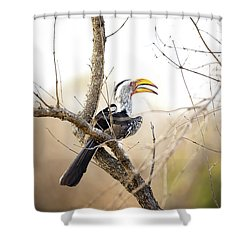 Yellow-billed Hornbill Sitting In A Tree.  Shower Curtain by Jane Rix