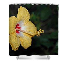 Yellow Bloom Shower Curtain