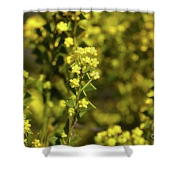 Yellow Blooms Shower Curtain by Cassandra Buckley