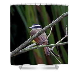 Shower Curtain featuring the photograph Yellow Breasted Chat by John Haldane
