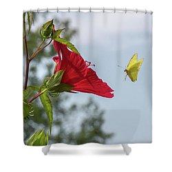Yellow Butterfly Art Shower Curtain