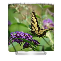 Yellow Butterfly On Purple Shower Curtain