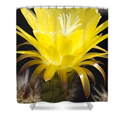 Yellow Cactus Flower Shower Curtain