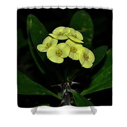 Shower Curtain featuring the photograph Yellow Cactus Flowers 001 by George Bostian