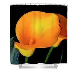 Yellow Calla Lilies - 01 Shower Curtain
