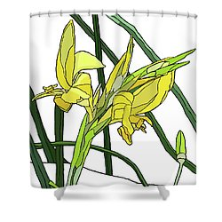 Yellow Canna Lilies Shower Curtain