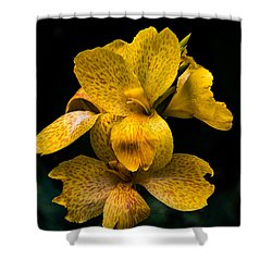 Yellow Canna Lily Shower Curtain