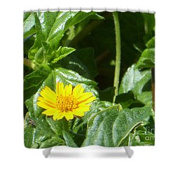 Yellow Caribbean Flower Shower Curtain