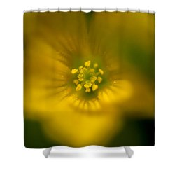 Yellow Clover Shower Curtain by Jay Stockhaus