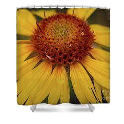 Yellow Cone Flower Shower Curtain by John Roberts