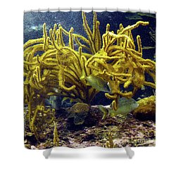 Shower Curtain featuring the photograph Yellow Coral Dance by Francesca Mackenney