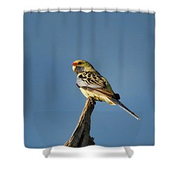 Shower Curtain featuring the photograph Yellow Crimson Rosella by Douglas Barnard