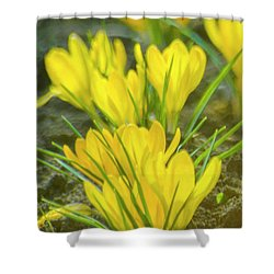 Yellow Crocuses Close Up Shower Curtain
