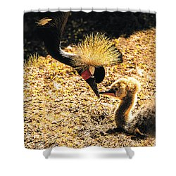 Yellow Crowned Crane Feeding Her Chick Shower Curtain