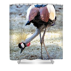 Yellow Crowned Crane Profile Standing Shower Curtain