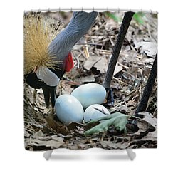 Yellow Crowned Crane Tending To Her Eggs Shower Curtain