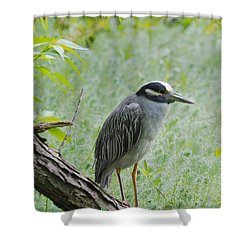 Yellow-crowned Night Heron 1 Shower Curtain