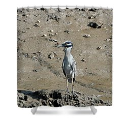 Yellow-crowned Night-heron Shower Curtain by Al Powell Photography USA