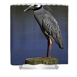 Yellow-crowned Night Heron Shower Curtain by Sally Weigand