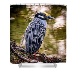 Shower Curtain featuring the photograph Yellow-crowned Night-heron by Steven Sparks