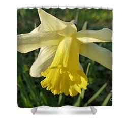 Yellow Daffodil 2 Shower Curtain by Jean Bernard Roussilhe