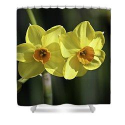 Yellow Daffodils 2 Shower Curtain