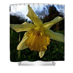 Yellow Daffodils 5 Shower Curtain by Jean Bernard Roussilhe