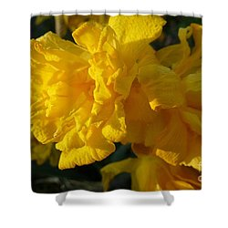 Yellow Daffodils Shower Curtain by Jean Bernard Roussilhe