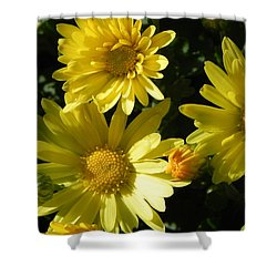 Yellow Daisies Shower Curtain by John Parry