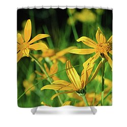 Yellow Daisies Shower Curtain